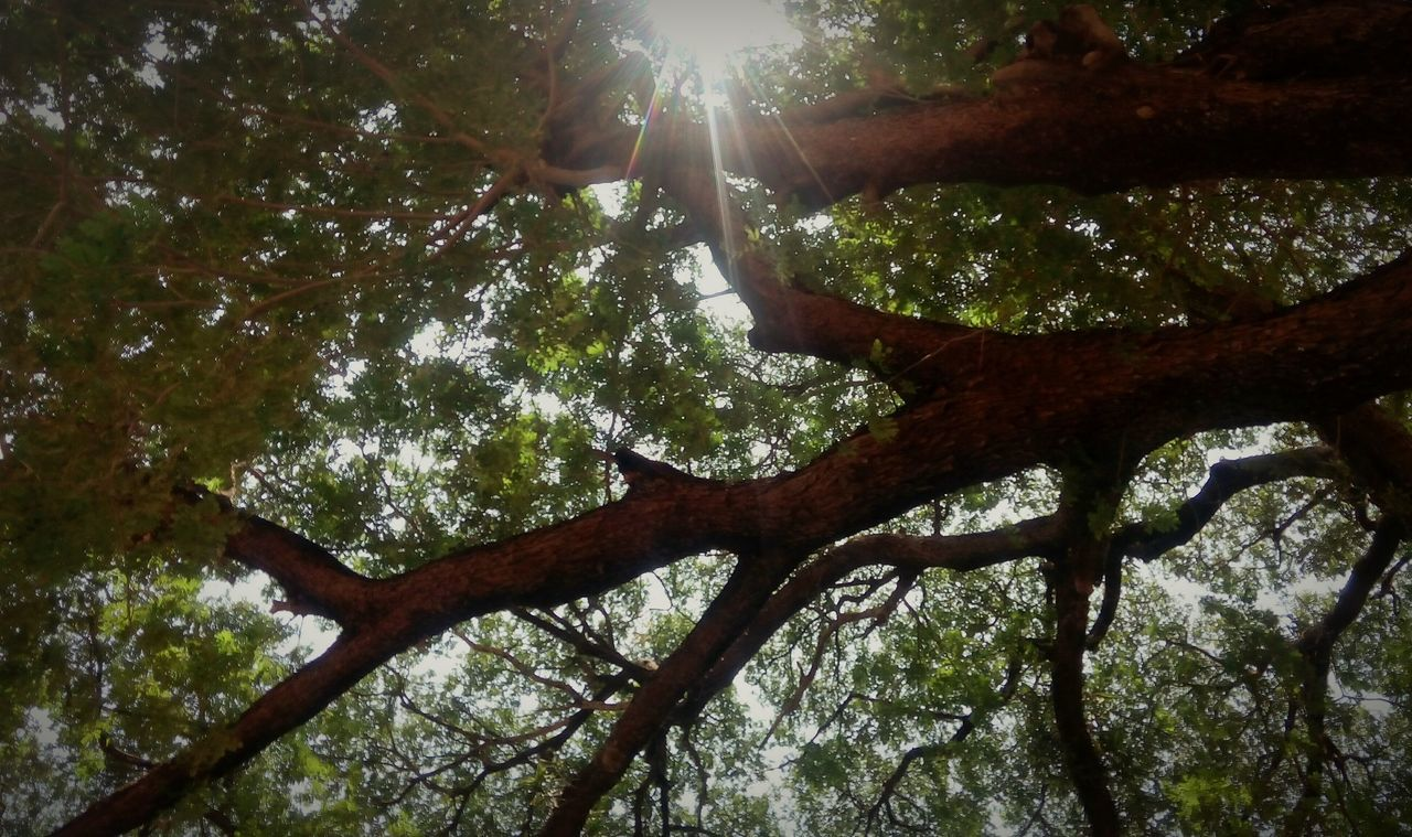 Trees Street Photography For The Love Of Trees ~ Tree Lover Tree And Sky Light Through Tree Sunlight Sunlight, Shades And Shadows Tree Art Tree Branches Tree_collection  Tree Hugger Treescape
