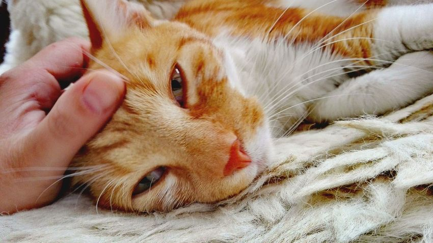 One Animal Domestic Animals Cat Whisker Feline Whiskers Catslife Catslover Beautiful Cats Karlie September 2016 Red Cat Autumn 2016 Animal Themes Purrdiaries Purrrrrrfect