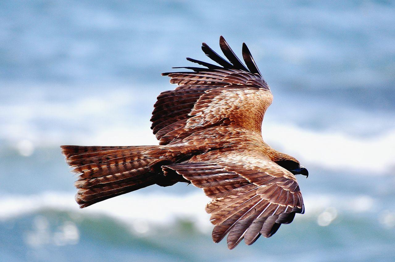 Beautiful stock photos of birds, Animal Themes, Animals In The Wild, Beak, Bird