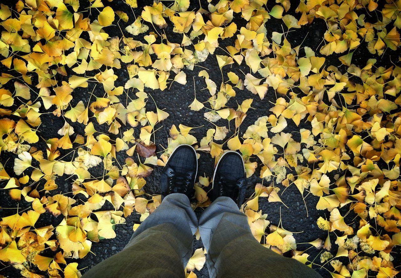 Beautiful stock photos of legs, Abundance, Autumn, Change, Day