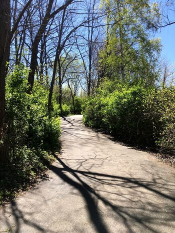 Capture The Moment Taking Photos Tree Shadow Sunlight Day The Way Forward Outdoors No People Growth Nature Tranquility Walkway Beauty In Nature Sky Finding My Way