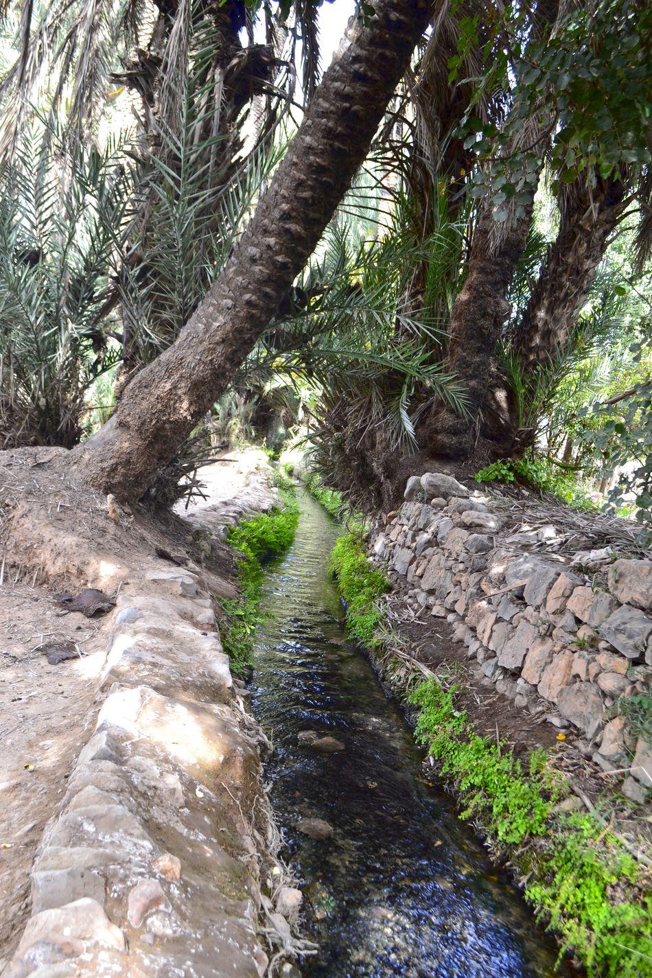 Hermoso Oasis en Tiuote en la provincia de Taroudant en Marruecos