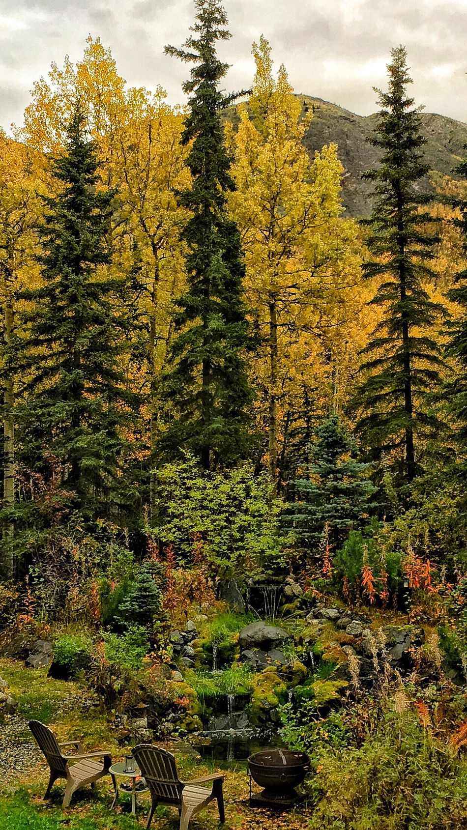 Fabulous Fall Tree Tranquil Scene Tranquility Growth Scenics Nature Beauty In Nature WoodLand Yellow Non-urban Scene Fallen Tree Green Outdoors Day Vibrant Color Green Color Sky Solitude Lush Foliage Majestic Freshness Nature Beauty In Nature Love The Colors Enjoyment