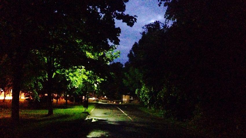 Tree Night No People Road Nature Taking Photos Photography Hello World OpenEdit City The Great Outdoors - 2017 EyeEm Awards