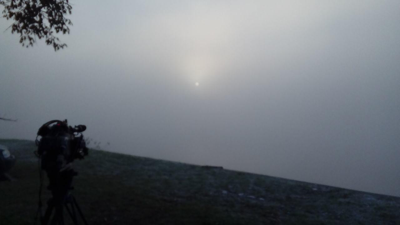 Niebla, tigre