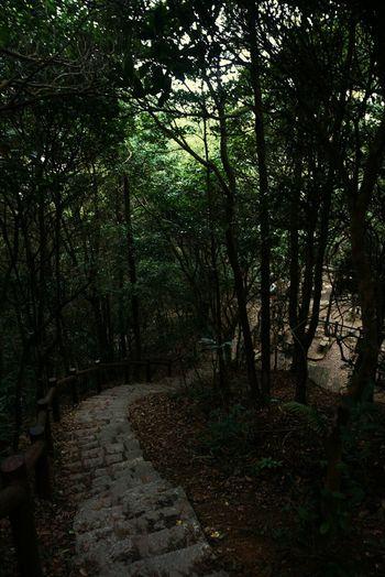 HongKong Thepeak Secret Garden Historical Place Paradise Pokfulam EyeEm EyeEmNewHere