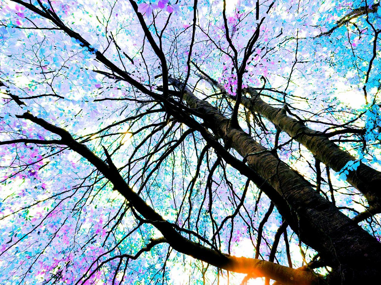 Beauty In Nature Branch Day Growth Low Angle View Nature No People Outdoors Sky Tree Autumn🍁🍁🍁 Autumn Autumn Colours Autumn Colors Leafscape EyeEm Eyemphotography Treescollection Trees And Plants  Autumn 2016 Autumnbeauty Eyem Eyem Gallery Eyeemphotography Fresh On Eyeem