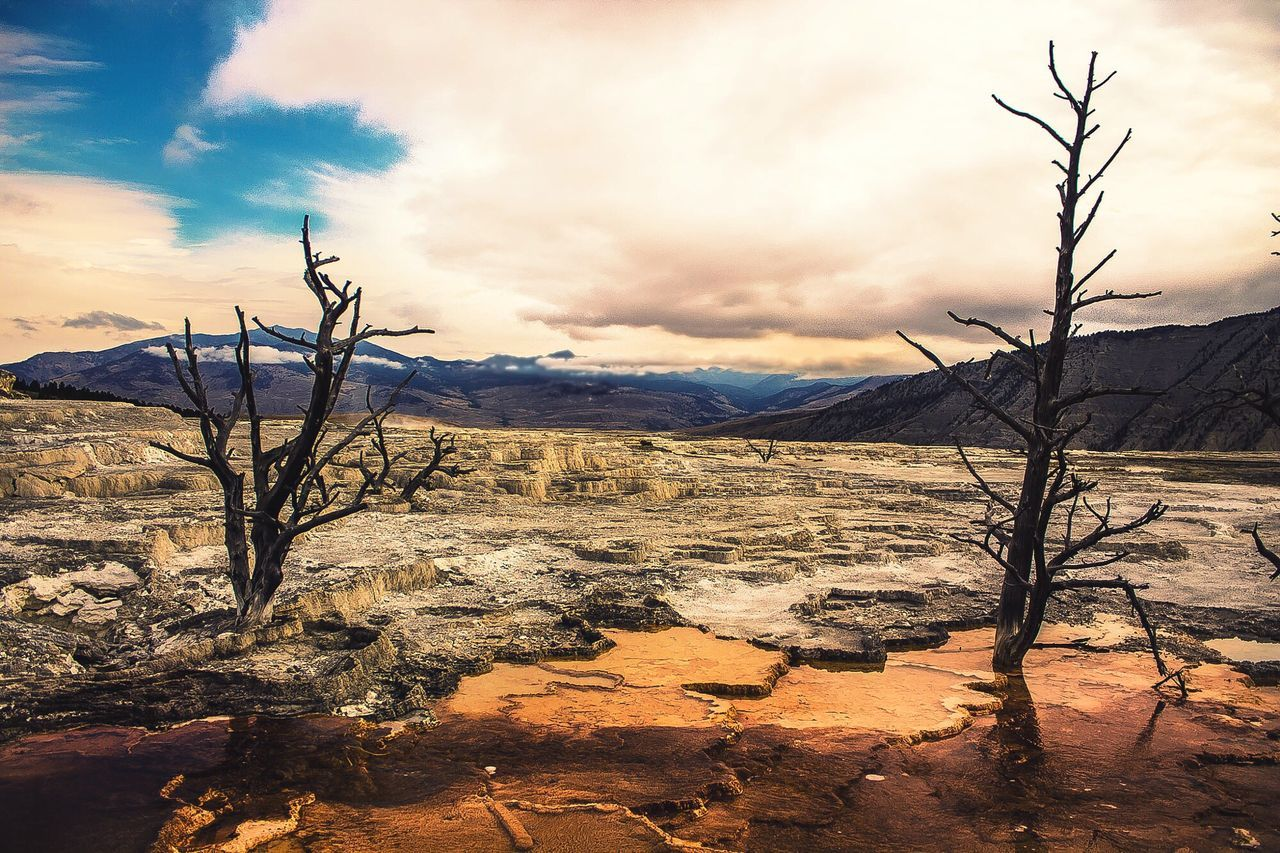 bare tree, landscape, nature, tranquility, tranquil scene, outdoors, mountain, branch, sky, scenics, no people, arid climate, beauty in nature, tree, day, dead tree