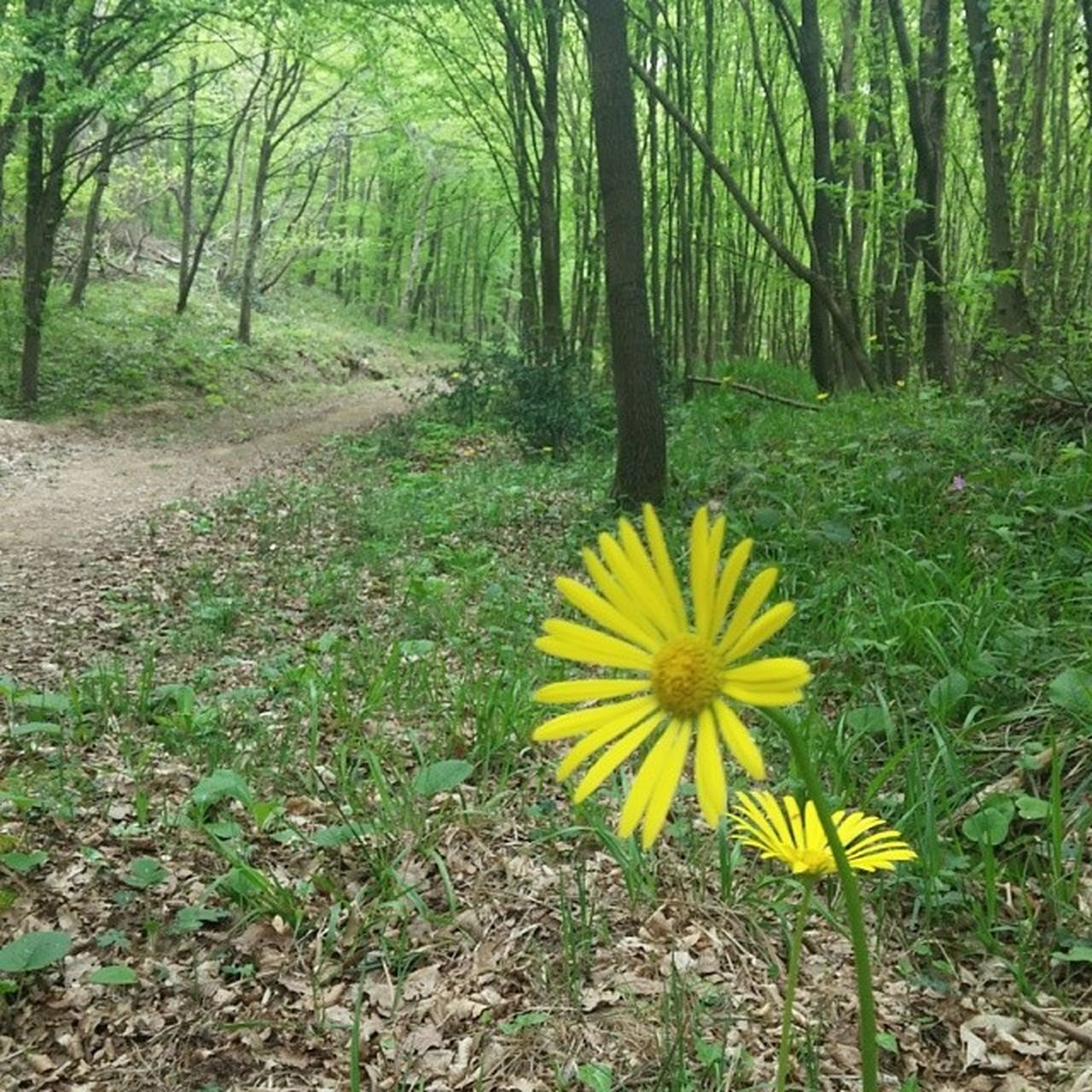 flower, nature, yellow, growth, beauty in nature, plant, fragility, outdoors, petal, tranquility, flower head, forest, day, freshness, no people, blooming, tree