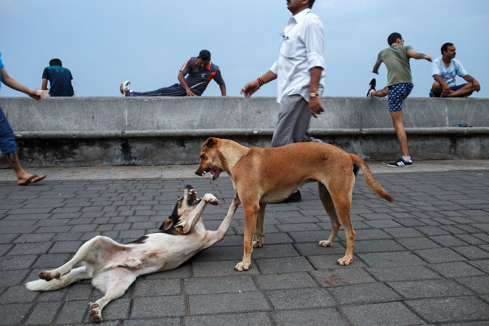 Morning activities at the waterfront promenade along Marine Drive in Mumbai, India. Street Streetphotography Street Photography India City Mumbai Fitness Activity Sport Exercising Dog Animal Outdoors