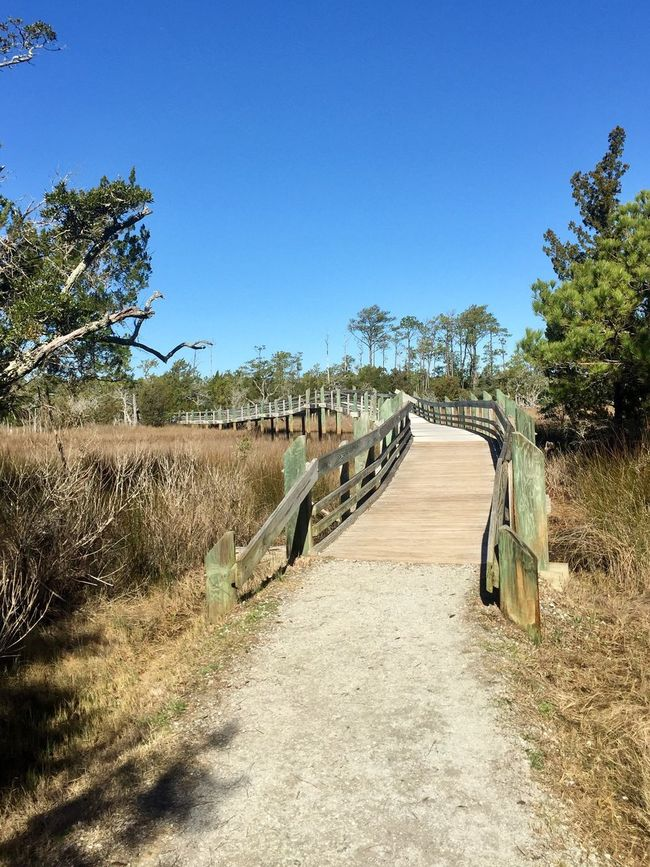 Tree Day Clear Sky The Way Forward No People Outdoors Landscape Blue Growth Tranquility Nature Beauty In Nature Sky Bridge Bridge - Man Made Structure Path Trail Hiking Marsh Swamp Wetland