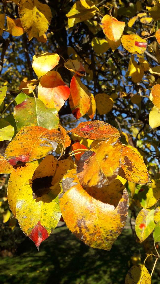 Sunshine No People Fallen Leaves Fallen Tree Fall Beauty Fall Beauty In Nature Sky Fall Colors Sun Landscape