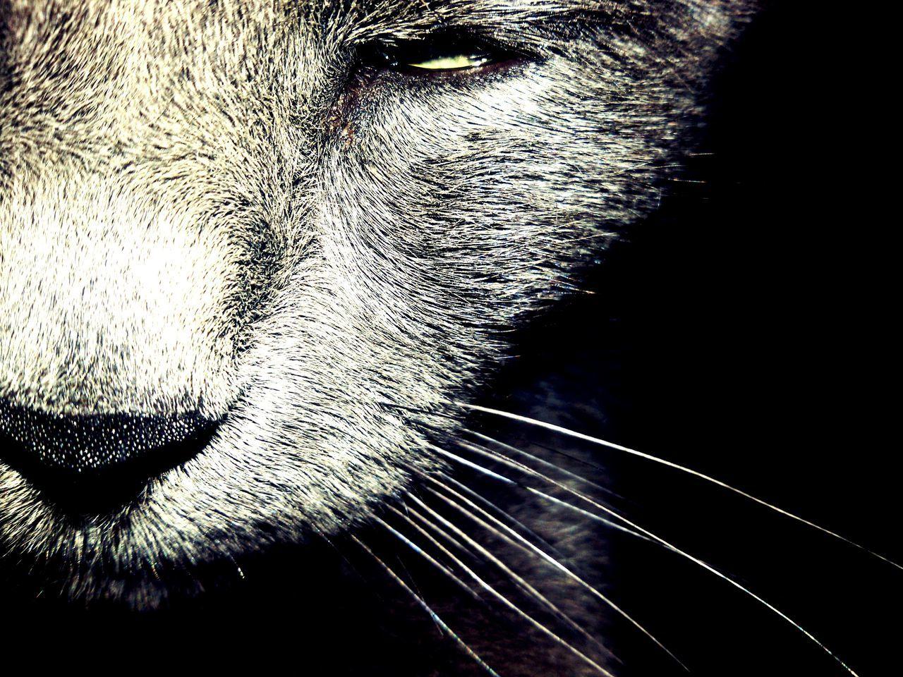 Close-Up Of Lion Cub