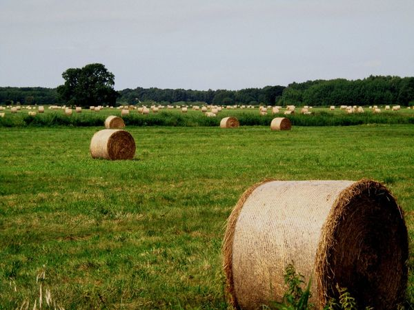 Usedom, Germany. Farm Outdoors Nature Rolled Up Agriculture Rural Scene No People EyeEmNewHere Lost In The Landscape