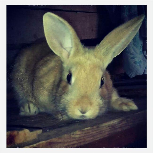 Rabbit Rabbit ❤️