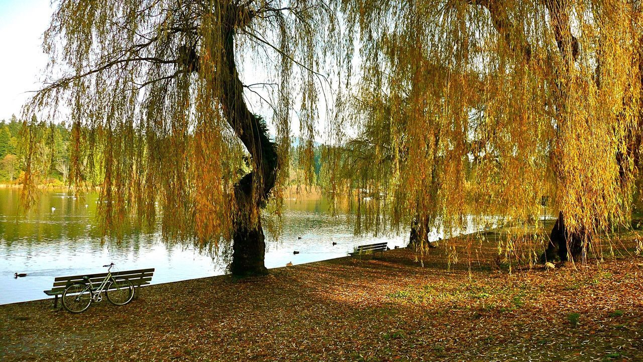 Tree Water Lake Nature Reflection Growth Tranquility Outdoors Beauty In Nature Tree Trunk Tranquil Scene Scenics No People Grass Day Sky Willow Tree Lakeside Park Bicycle Tree Serene Outdoors Serenity