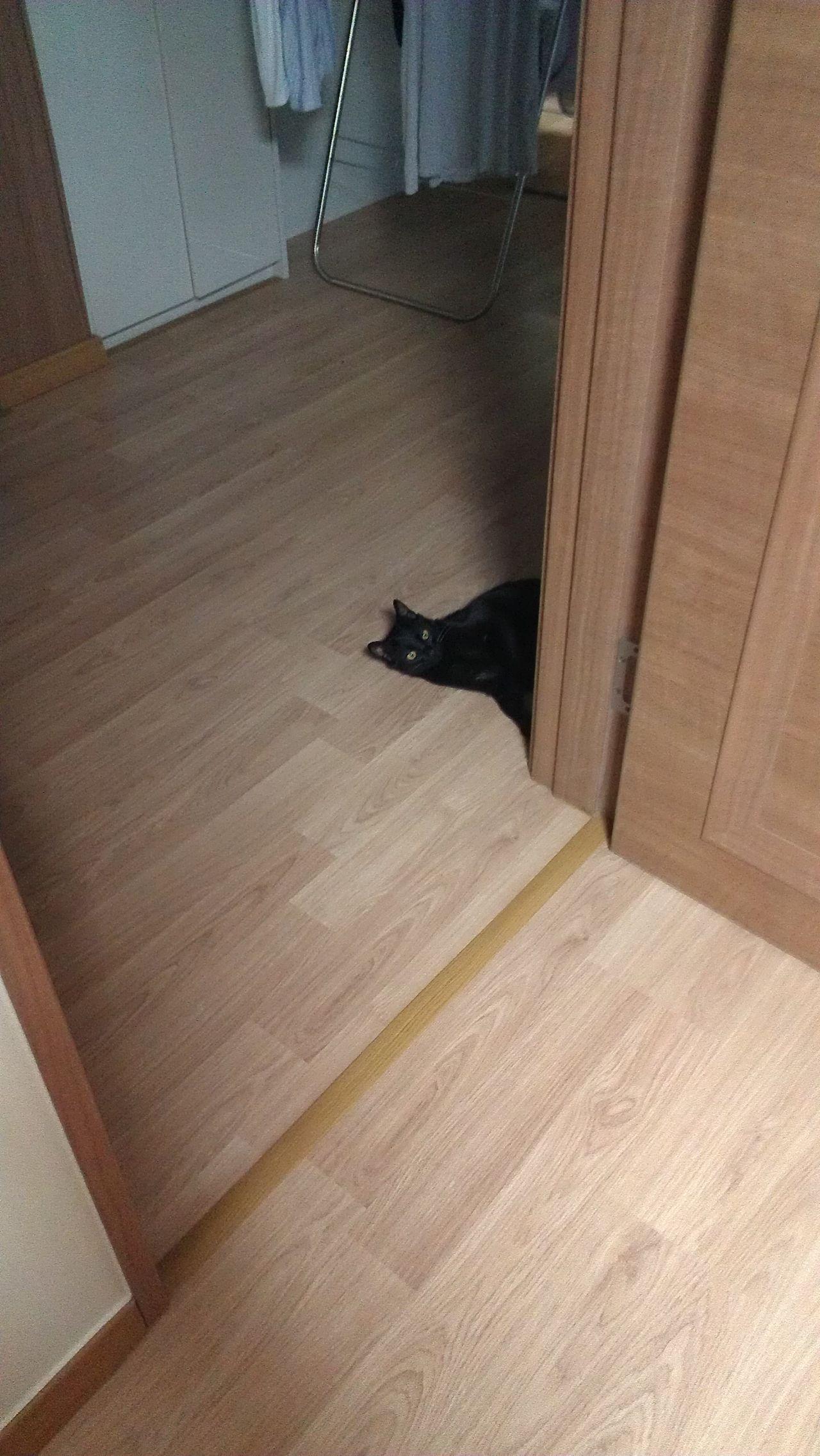 Indoors  Pets Home Interior Domestic Animals Mammal No People Animal Themes Close-up DayNight Cat Cat♡ BLackCat Hello Peekaboo Dawn