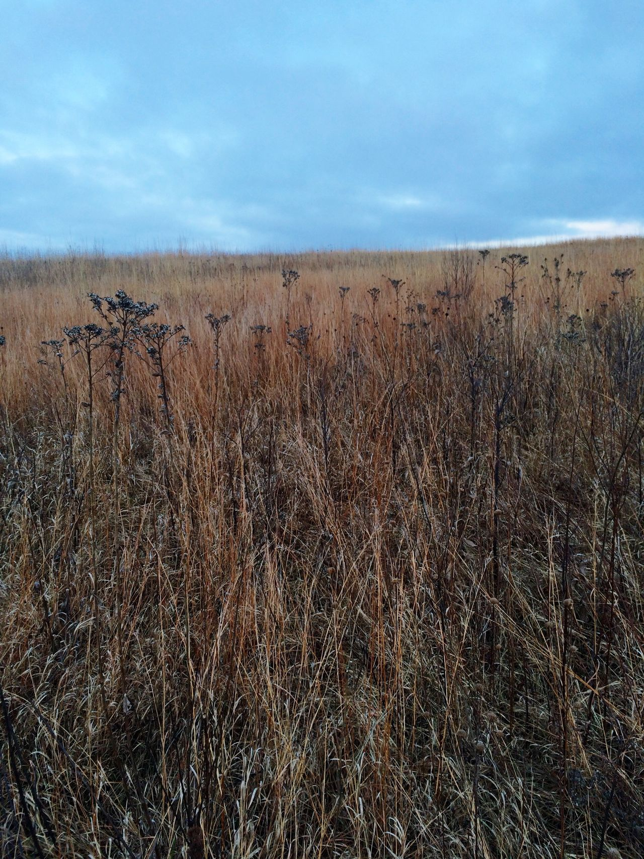 Winter Grassland in the American MidWest Nature Landscape Prarie Subtle Beauty