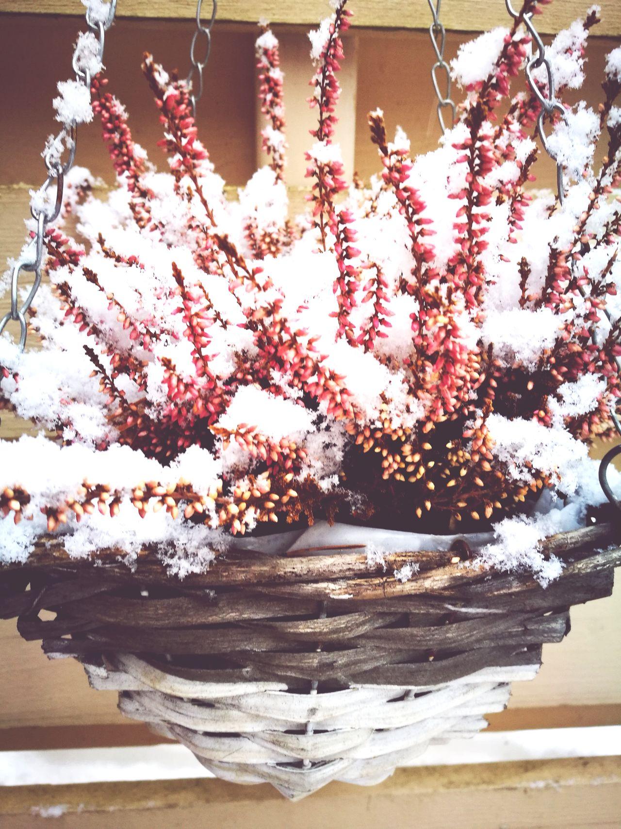 Winter Snow Calluna White First Eyeem Photo