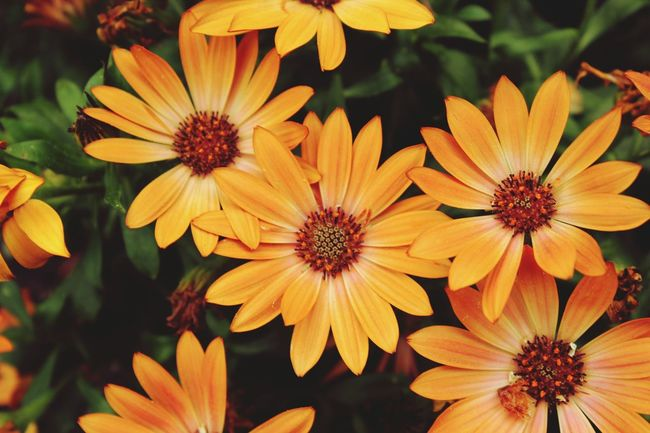Flowers in my garden Flowers,Plants & Garden Summer Flowers Orange Flowers Summertime Taking PhotosDaisies ♥  Gerberdaisy Sunshine ☀