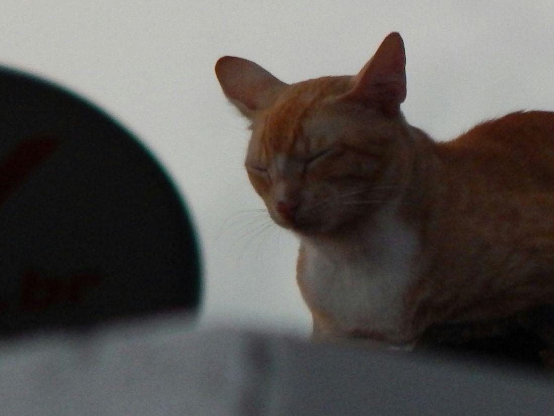Walking Around Gatos No Telhado People Watching Fim De Tarde!!!... ;) Cat♡