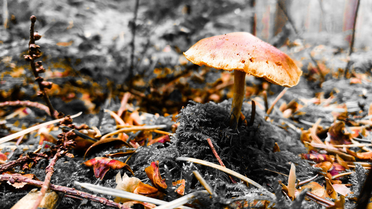 Edit no 2... Mushroom Nature Outdoors Beauty In Nature Growth No People Autumn🍁🍁🍁 Autumn 2016 Forrestwalk Mushrooms Eyeem Naturelovers Nature_perfection Autumnbeauty Autumn Colors Plants 🌱 Edit Photo Edited My Way Day Forrestautmun Colors Forrest Photography Beauty In Nature Close-up Focus Object