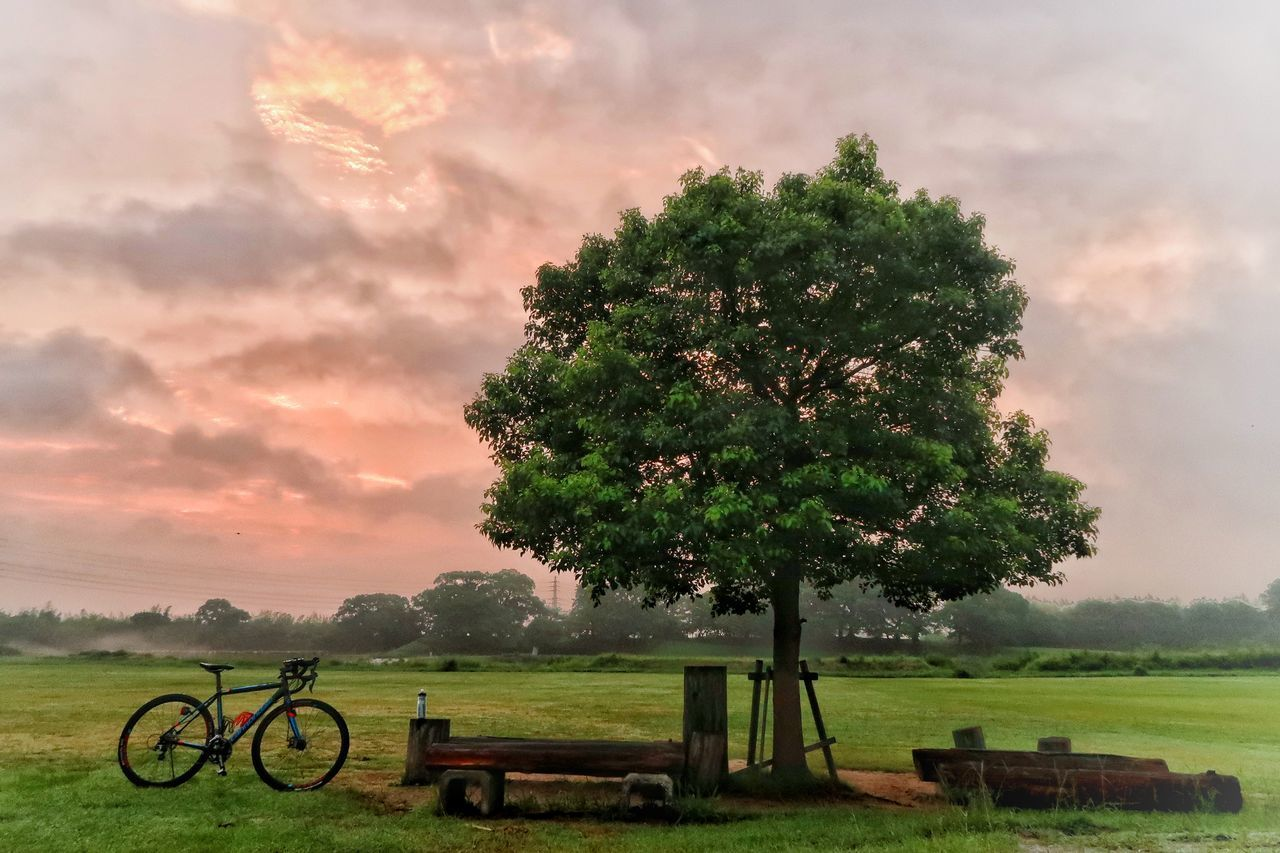 tree, grass, tranquility, scenics, beauty in nature, nature, tranquil scene, green color, sky, field, no people, cloud - sky, growth, day, landscape, sunset, outdoors, golf course