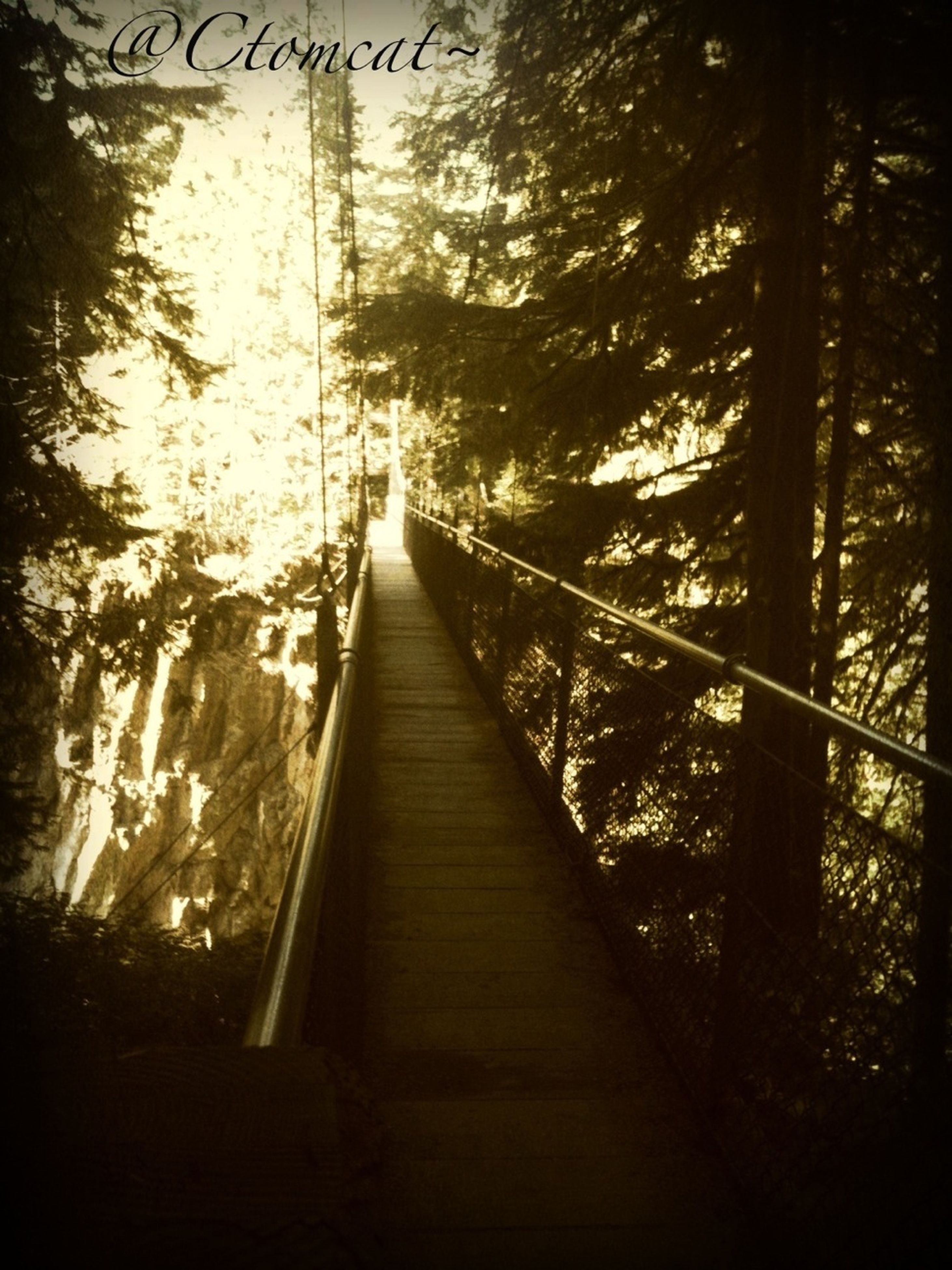 tree, the way forward, forest, diminishing perspective, built structure, vanishing point, tranquility, connection, railing, growth, nature, footbridge, tree trunk, bridge - man made structure, architecture, day, no people, outdoors, sunlight, wood - material