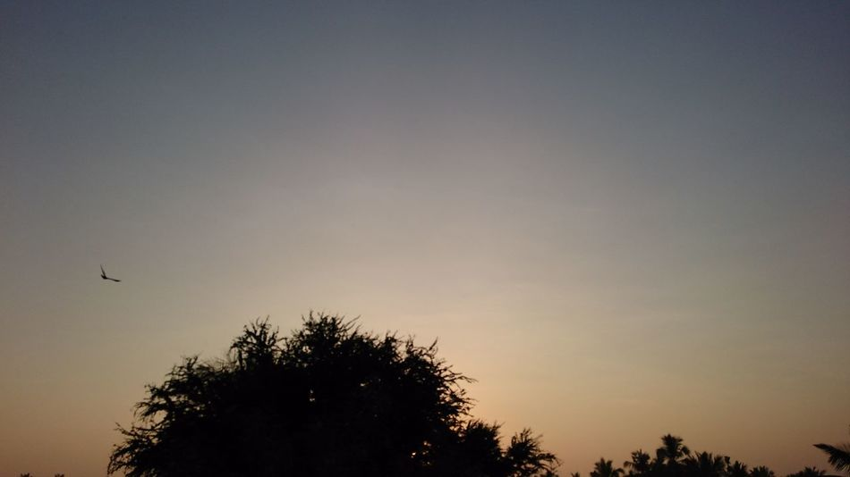 Sunset Hues Of Autumn dusk Bird lonely Returning Home night photography Relaxing No People Bliss Outdoors Sky Sunset Touchthesky Horizon