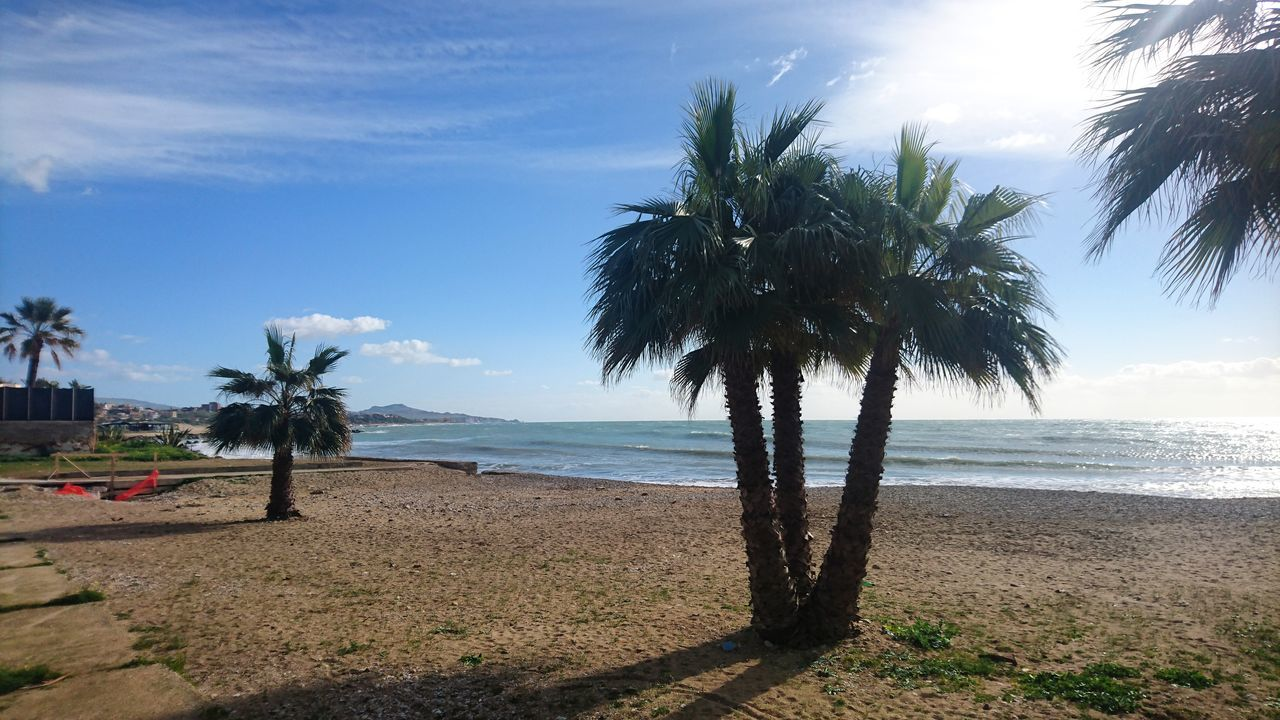 Tree Beach Sea Palm Tree Growth Water Sky Nature Horizon Over Water Sand Scenics No People Outdoors Beauty In Nature Day Agrigento