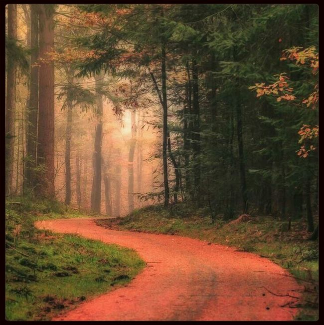 follow the red carpet Magic Forest Eye For Photography EyeEm Best Shots - Landscape Forest Path