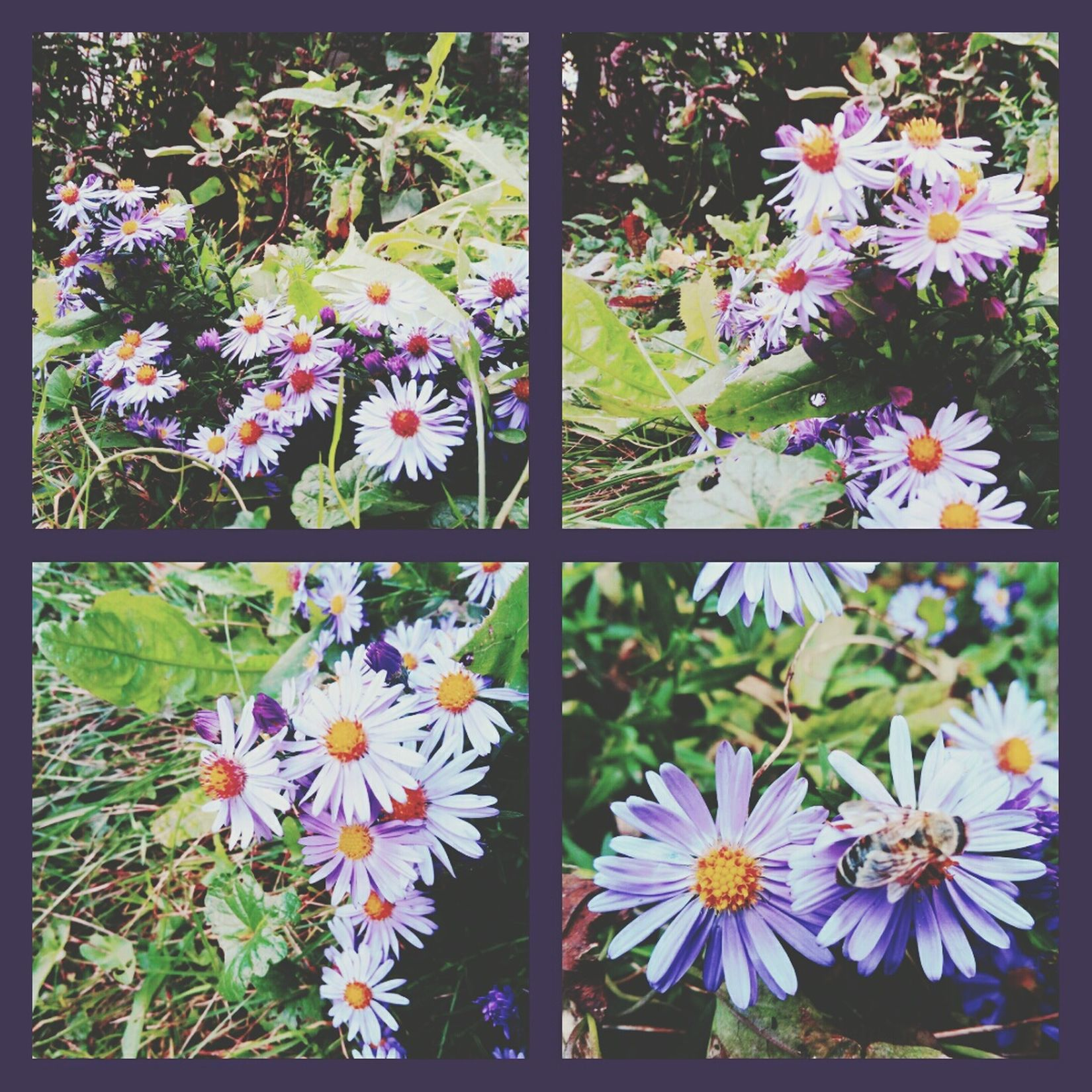Purple In Bloom Blossom Nature Plant Multi Colored Freshness Fragility Flower Goodbye Summer...hello Autumn:) The Places I've Been Today