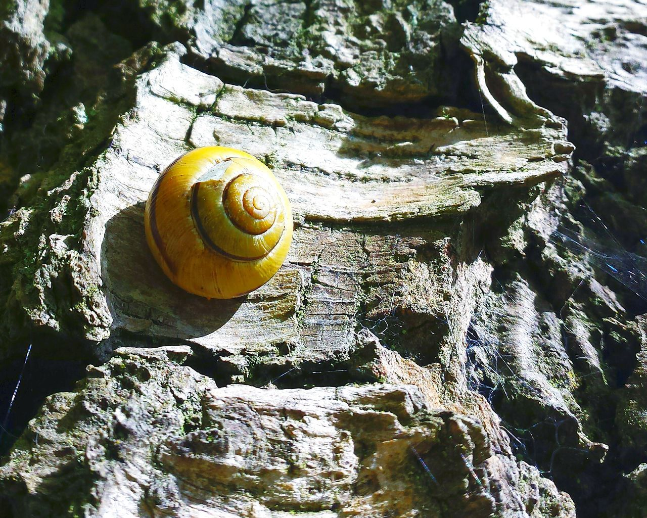 Snail On Tree Trunk