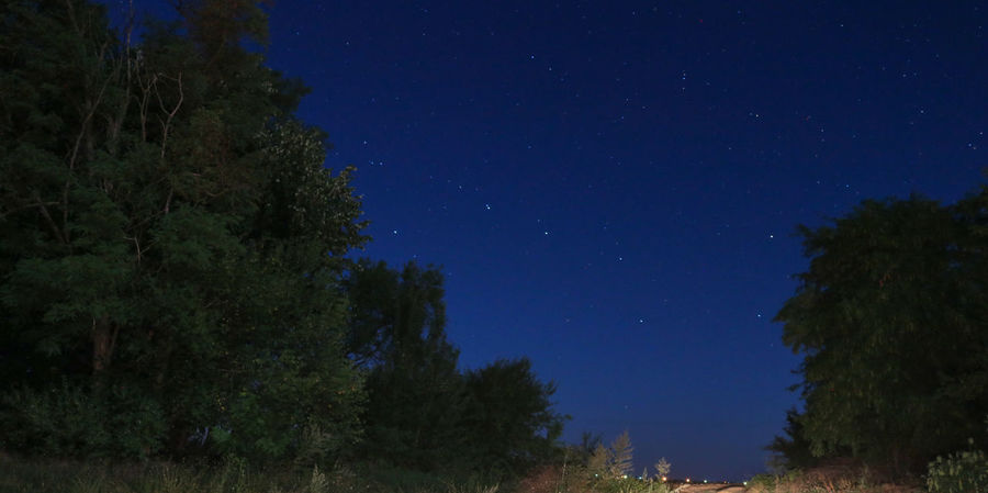 Ursa Major Astronomy Beauty In Nature Low Angle View Nature Night No People Outdoors Scenics Sky Star - Space Tranquil Scene Tranquility Tree