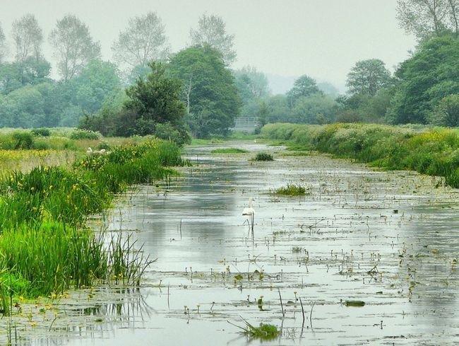 Somerset Levels Uk Wetland Waterlily Nature Photography Edit Photo Relaxing Having Fun :)