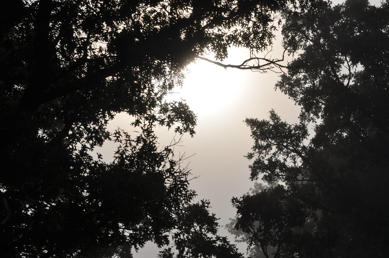 Fog Foggy Morning Inspiration Insprational Nature Nature Photography Trees