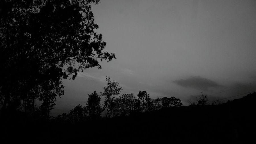 Welcome To Black Tree Silhouette Nature Beauty In Nature Sky Outdoors