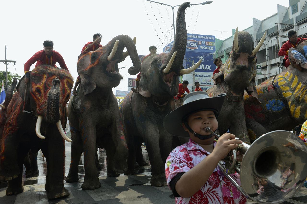 Beautiful stock photos of elefant, traditional festival, holding, city, performance