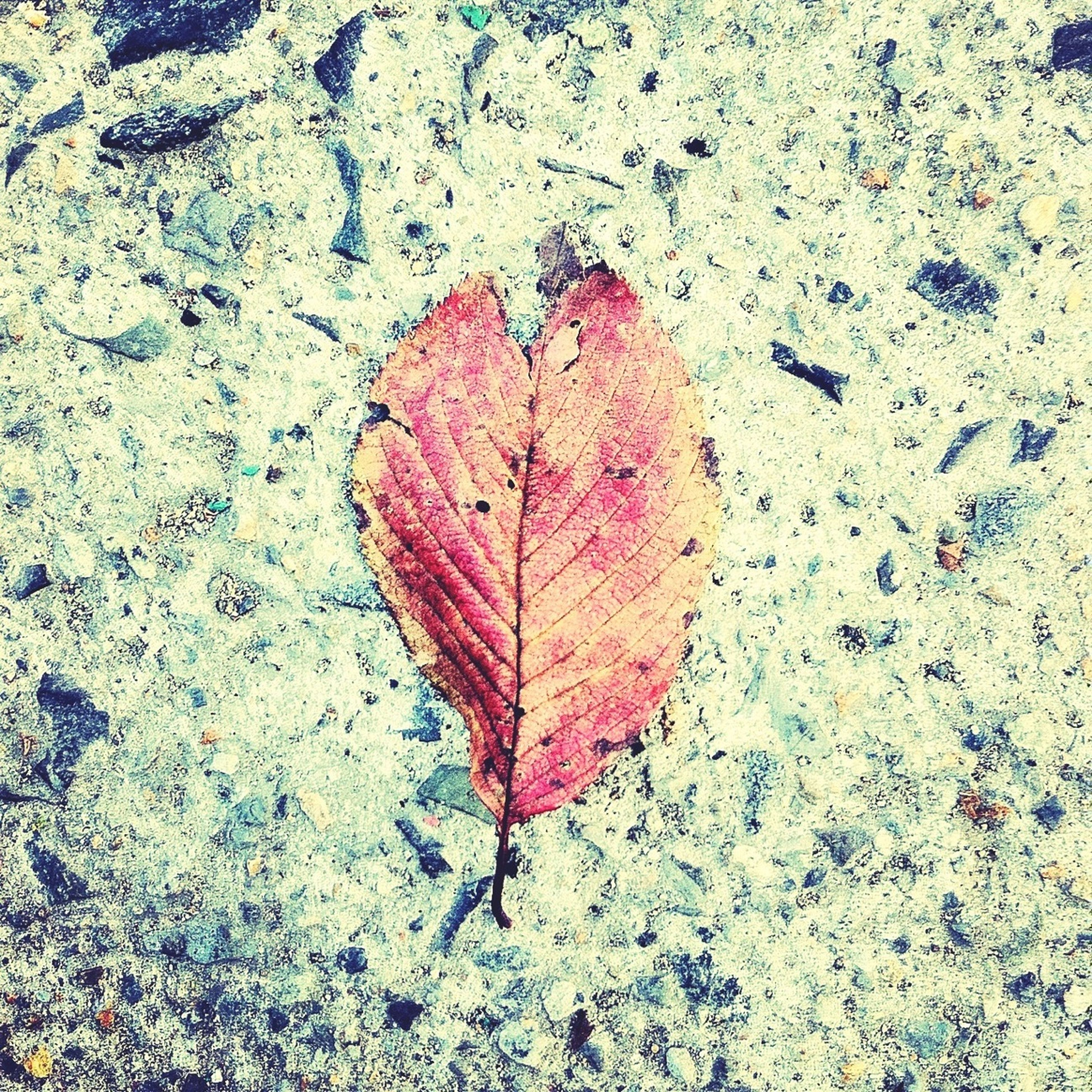 leaf, autumn, change, season, dry, leaf vein, close-up, high angle view, fallen, maple leaf, wet, nature, leaves, textured, asphalt, street, natural pattern, day, outdoors, no people