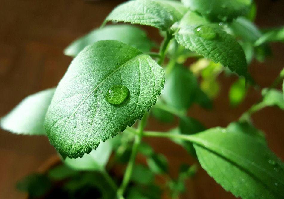 Plants 🌱 Nature Sunlight ☀ Waterdrops My Houseplants 🌵🌵