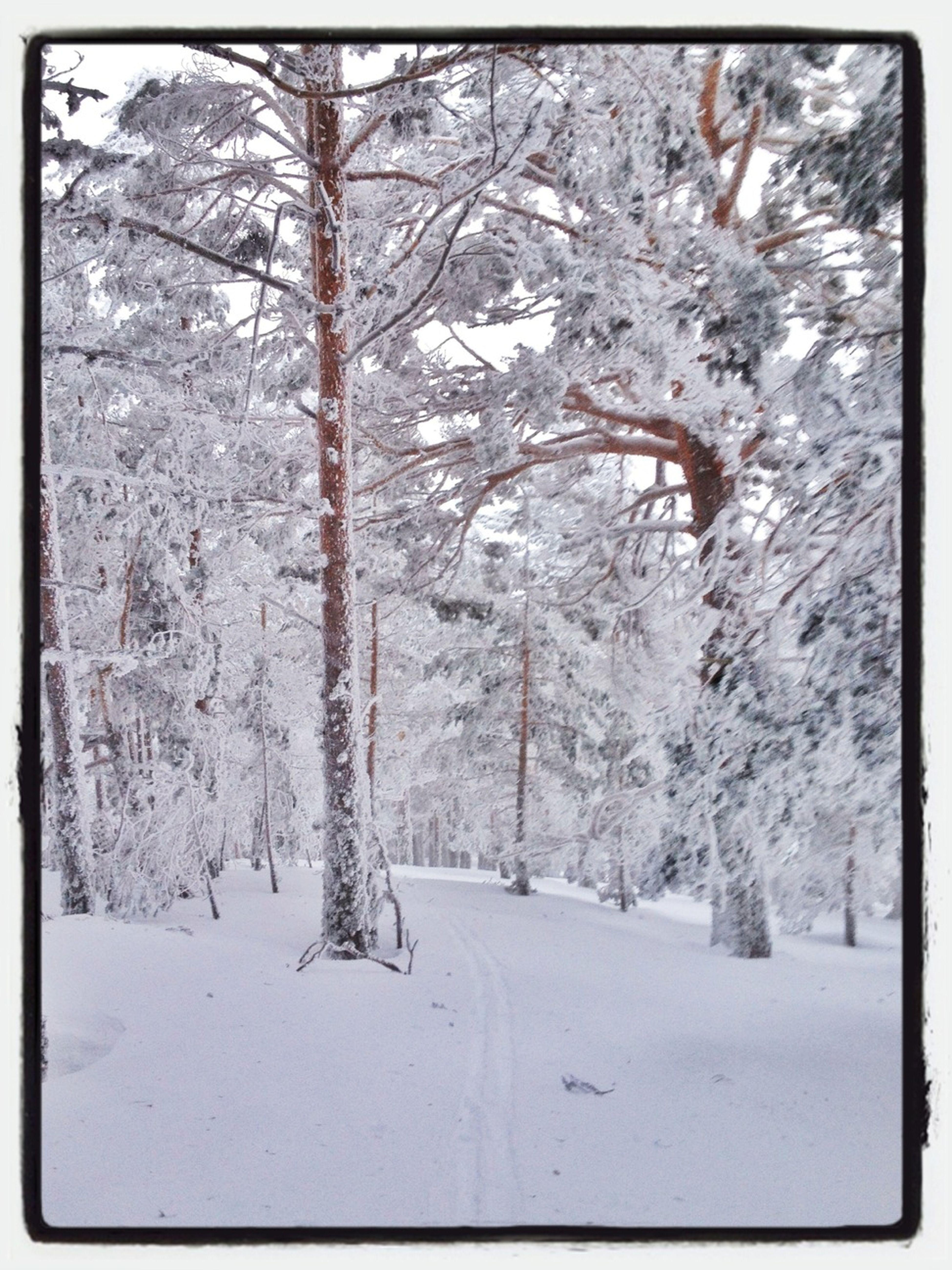 Forest #esquídemontaña #skimountaineering #peñalara #mountain #snow  #colors #cold #training #ilovemountain #gasss #forest