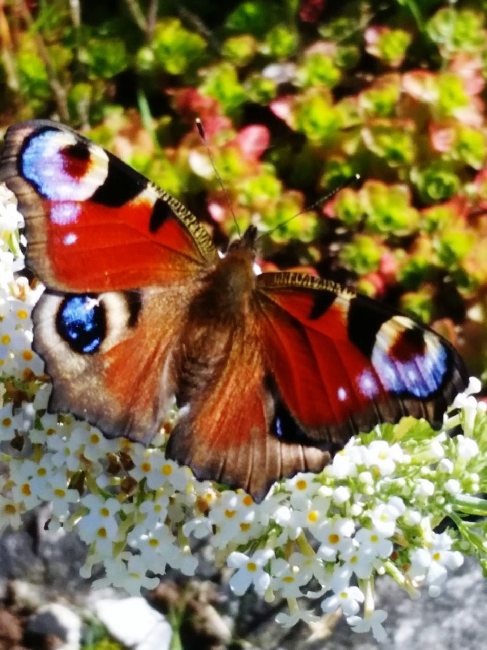 Butterfly Outdoors Enjoying The Sun Escaping Nature