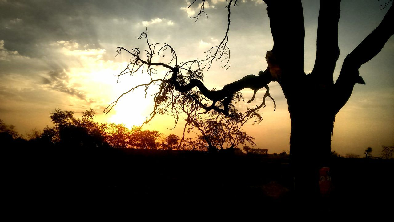 sunset, silhouette, tree, sky, nature, beauty in nature, tree trunk, scenics, tranquil scene, outdoors, growth, landscape, no people, day