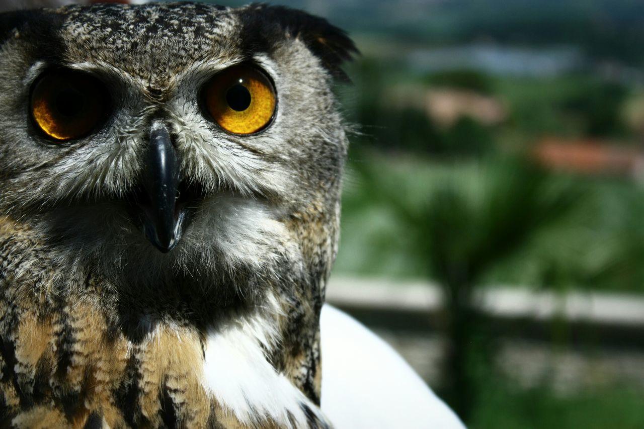 Beautiful stock photos of eyes, Animal Eye, Animal Themes, Animals In The Wild, Bird