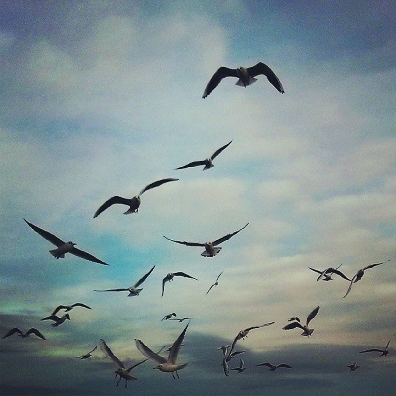 flying, bird, animals in the wild, animal themes, spread wings, mid-air, animal wildlife, flock of birds, wildlife, nature, migrating, large group of animals, low angle view, no people, day, sky, outdoors, togetherness, beauty in nature, seagull