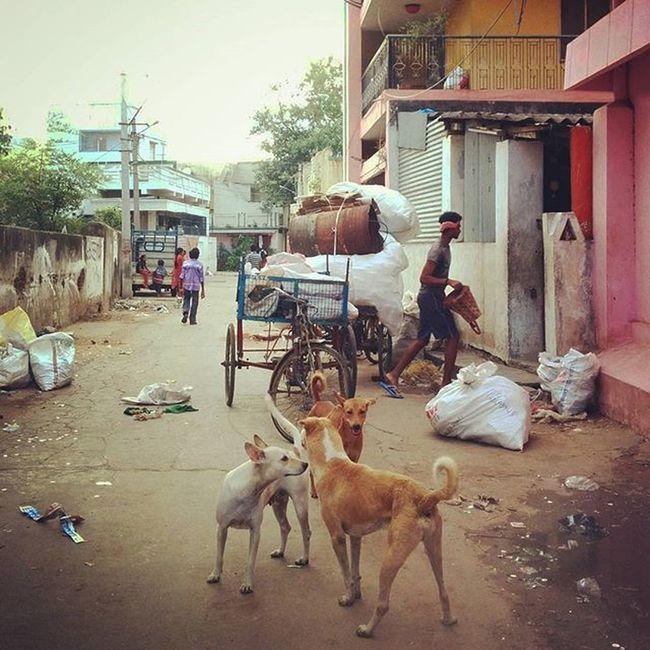 Street tales Lifeinshots Streetphotography Streets Eveningwalks Dogs Stroll Streetdogs Streetdogspack Follow