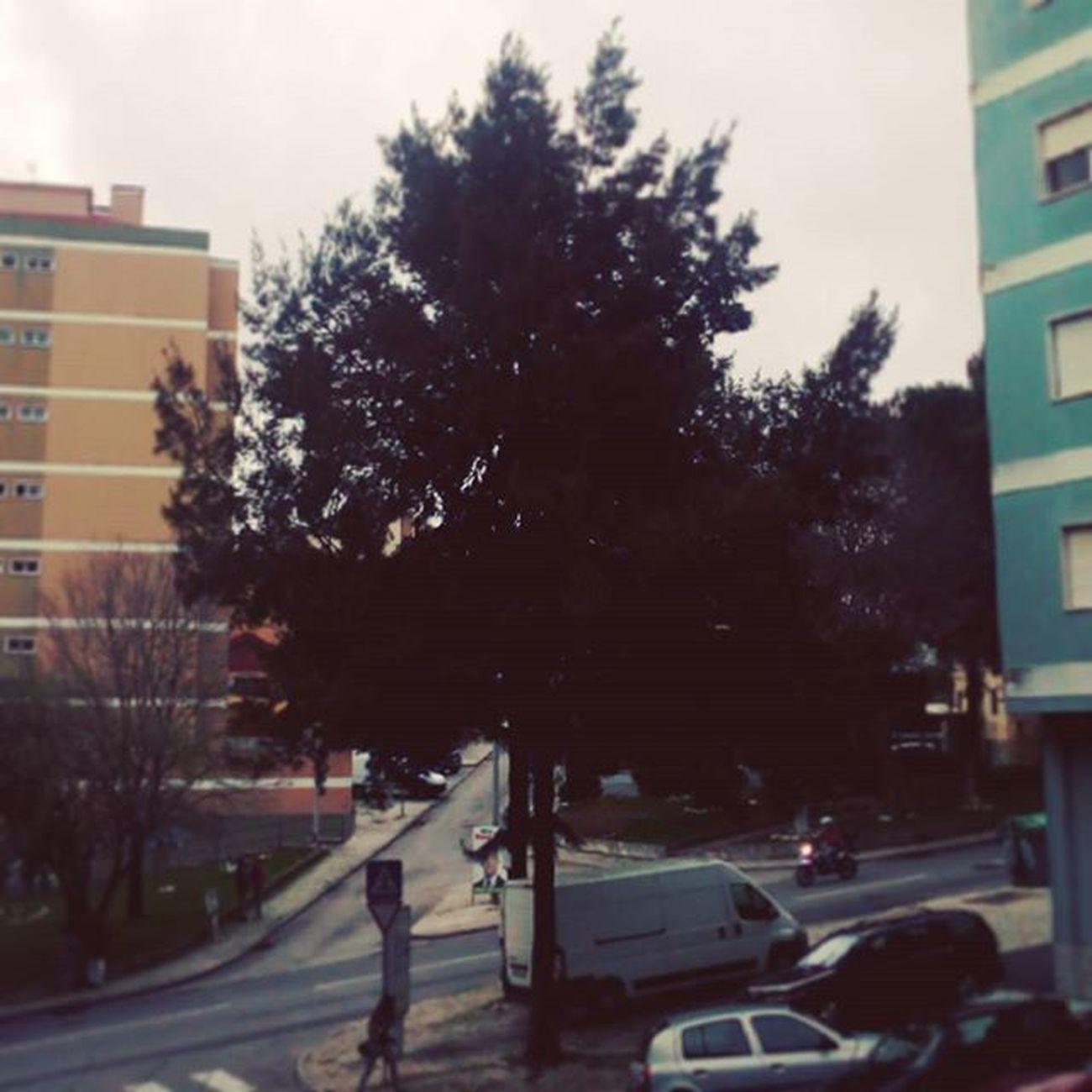 Standing tall. Treesarelove Lonesurvivor