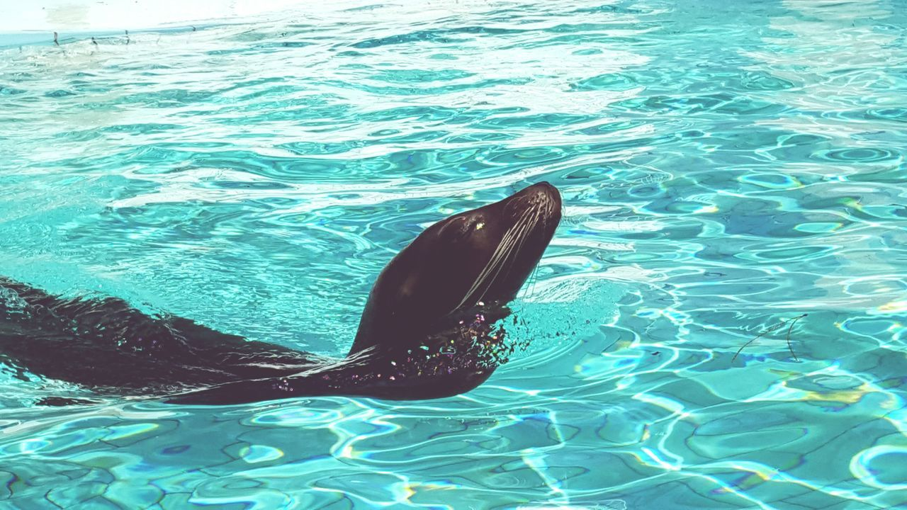 Sea Aquatic Mammal Water Animal Themes Sea Life Animals In The Wild Swimming Mammal Dolphin Outdoors No People Nature Day Whale Sea Lion