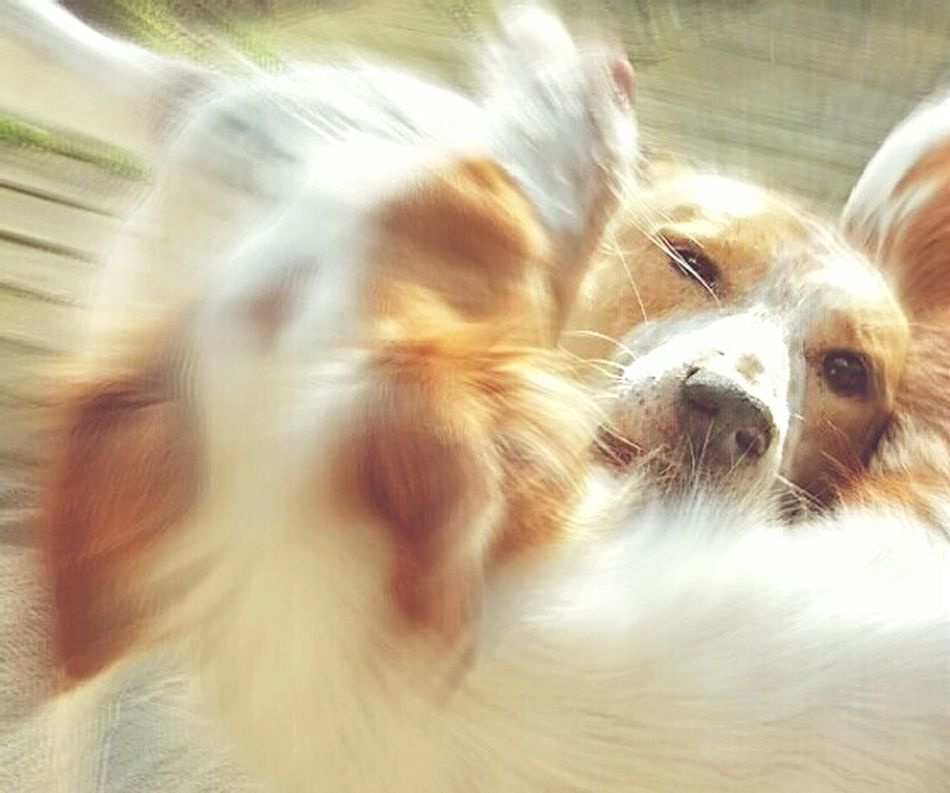 Enjoying Life Dog Love Dogdance AntiM Summer Dogs EyeEm Best Shots My Dogs Are Cooler Than Your Kids Capturing Movement I Love My Dog❤ Capture The Moment