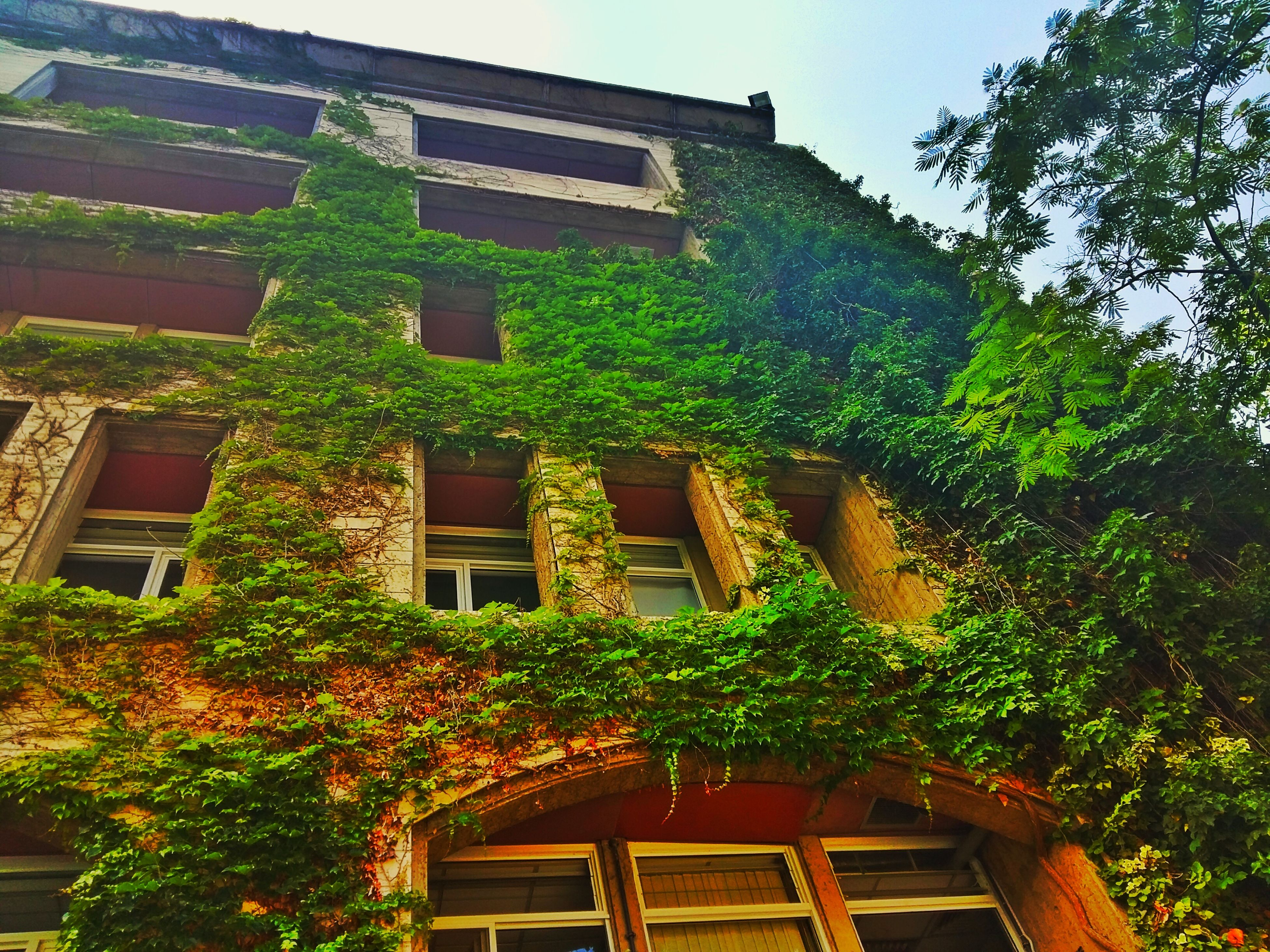 architecture, building exterior, built structure, window, low angle view, tree, house, residential building, residential structure, growth, plant, balcony, day, sky, building, outdoors, no people, ivy, sunlight, clear sky